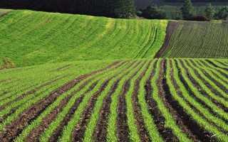 Налог с продажи земельного участка в собственности менее 3 лет