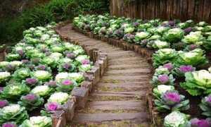 Как оформить садовый участок в собственность если нет документов