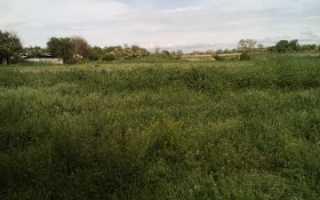 Выписка из ЕГРН на земельный участок и её образец
